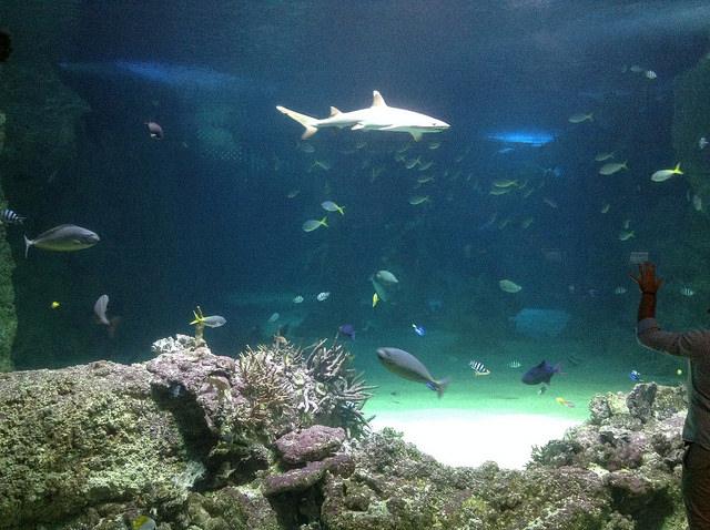 Sea Life Sydney Aquarium Review